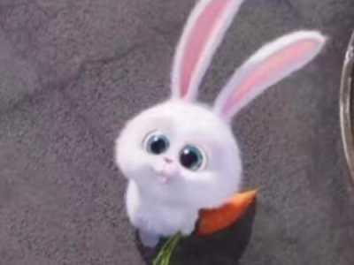 兔子和狗情侣头像 兔子和狗的一对头像